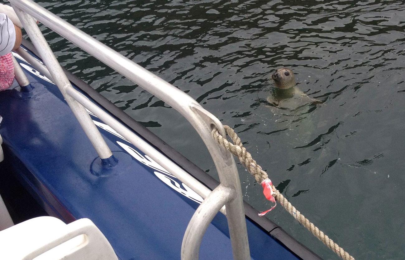 Tenby Boat Trips Seal Safari