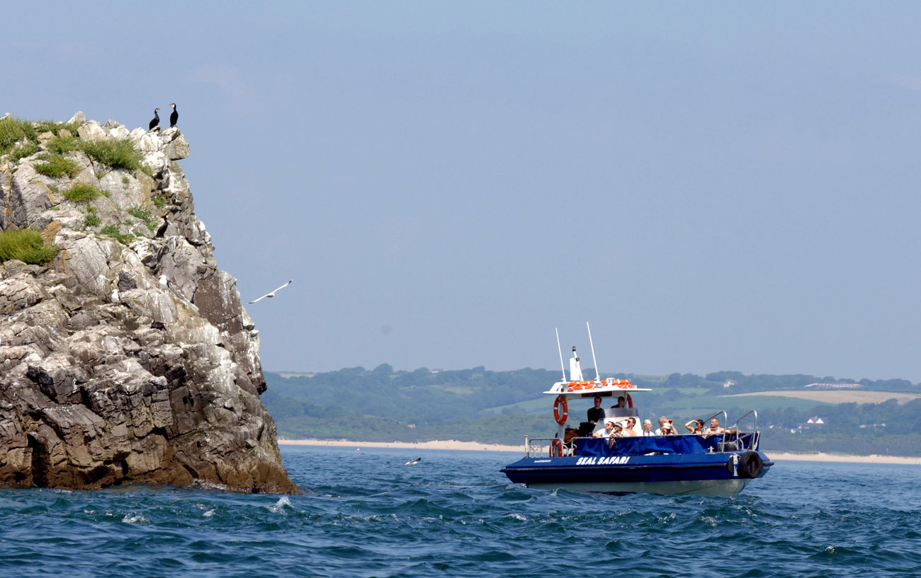 Seal Safari Tenby Boat Trips