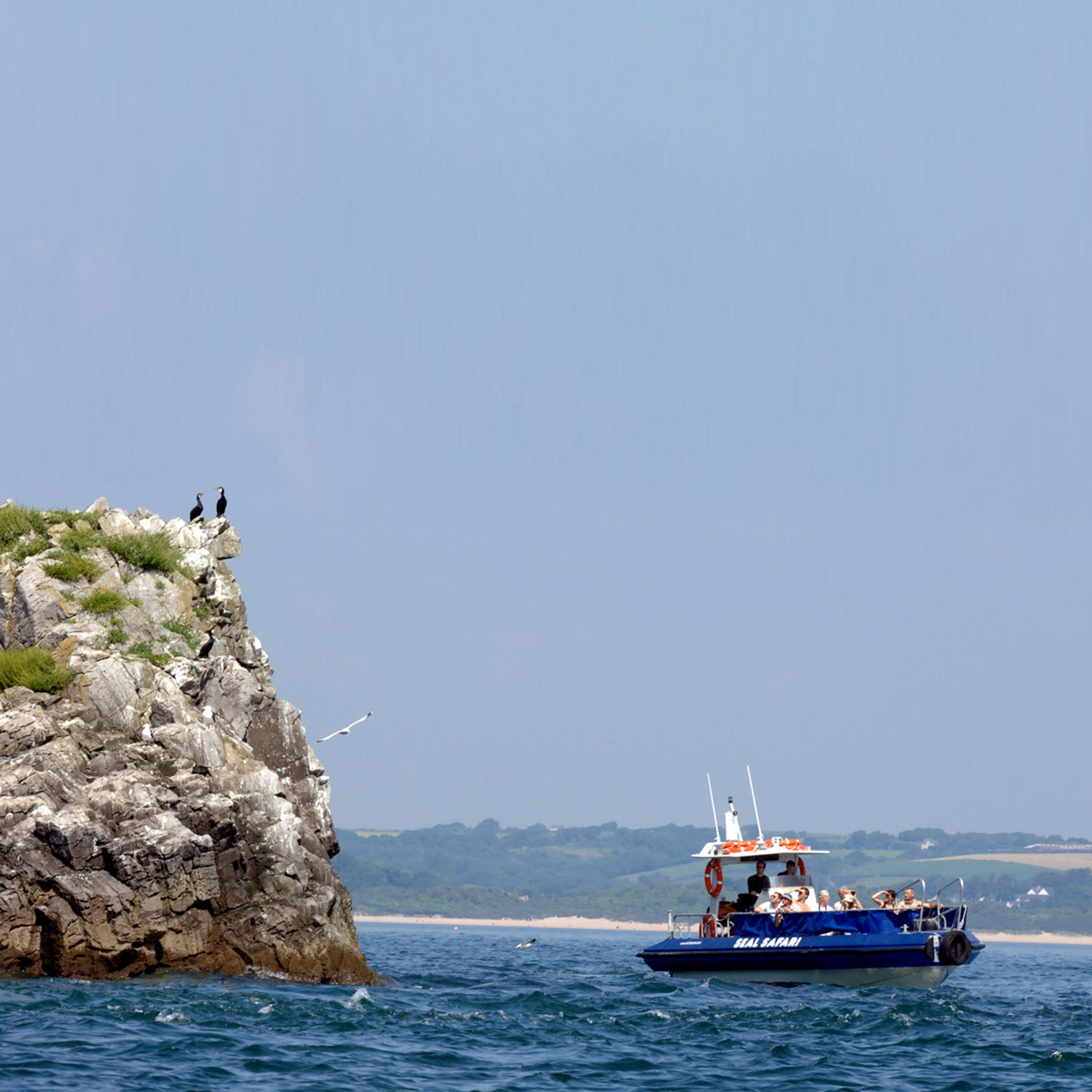 Tenby Boat Trips Seal Safari 2